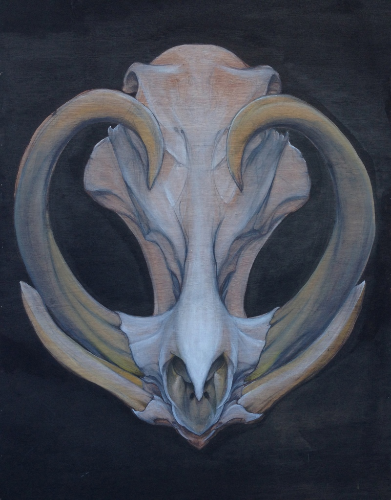Noble Tariq Sabur- Warthog skull painting tempe arizona fine art artist painter mural muralist realism tattoo ink paint-decor-interior-design-Apeshit 2013